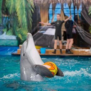 Дельфинарии, океанариумы Борисовки