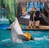 Дельфинарии, океанариумы в Борисовке